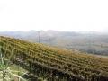 Piemonte 1
